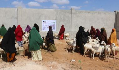 Directaid development Al-Sanabel Project - Goat Production-2 9