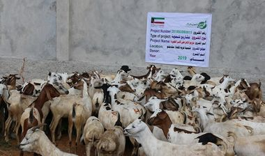 Directaid مشاريع التنمية Al-Sanabel Project - Goat Production-2 10