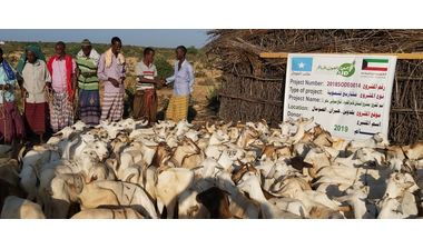 Directaid development Al-Sanabel Project - Goat Production-2 1