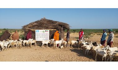 Directaid مشاريع التنمية Al-Sanabel Project - Goat Production-2 2