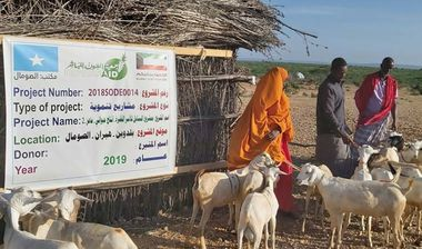 Directaid development Al-Sanabel Project - Goat Production-2 3