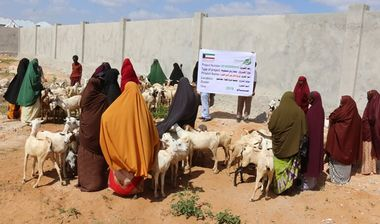 Directaid development Al-Sanabel Project - Goat Production-2 4