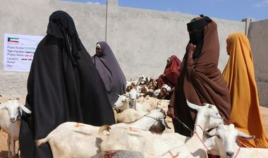 Directaid development Al-Sanabel Project - Goat Production-2 6