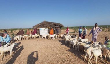 Directaid مشاريع التنمية Al-Sanabel Project - Goat Production-2 1