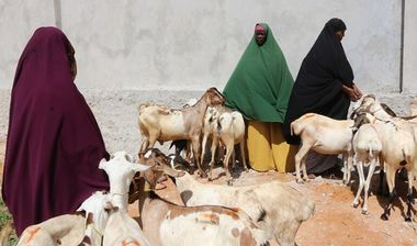 Directaid development Al-Sanabel Project - Goat Production-2 8