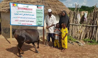 Directaid development Al-Sanabel Project Cow Production-1 2
