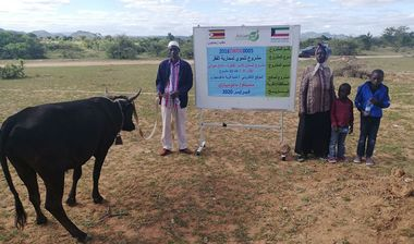 Directaid مشاريع التنمية Al-Sanabel Project Cow Production-4 1