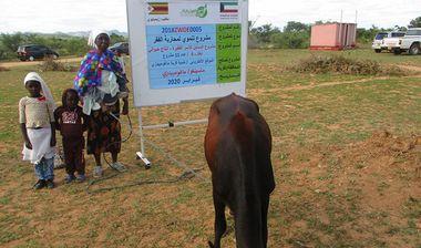 Directaid مشاريع التنمية Al-Sanabel Project Cow Production-4 9