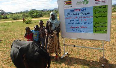 Directaid مشاريع التنمية Al-Sanabel Project Cow Production-4 10