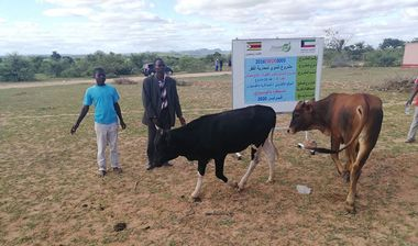 Directaid مشاريع التنمية Al-Sanabel Project Cow Production-4 11