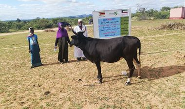 Directaid مشاريع التنمية Al-Sanabel Project Cow Production-4 14