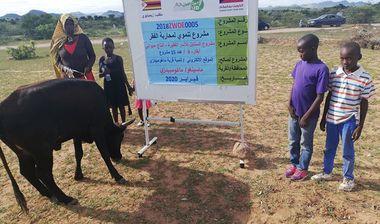 Directaid مشاريع التنمية Al-Sanabel Project Cow Production-4 17