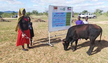 Directaid مشاريع التنمية Al-Sanabel Project Cow Production-4 18