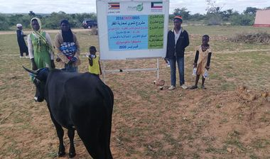 Directaid مشاريع التنمية Al-Sanabel Project Cow Production-4 19