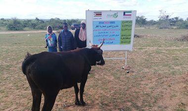 Directaid مشاريع التنمية Al-Sanabel Project Cow Production-4 20