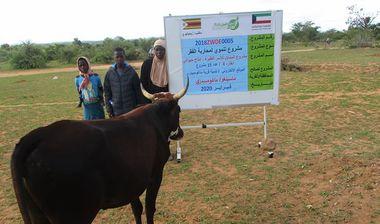 Directaid مشاريع التنمية Al-Sanabel Project Cow Production-4 5