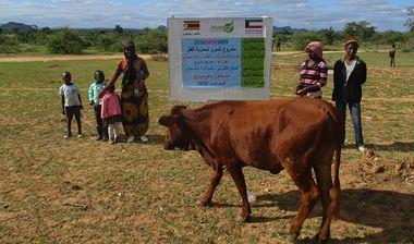 Directaid مشاريع التنمية Al-Sanabel Project Cow Production-4 7