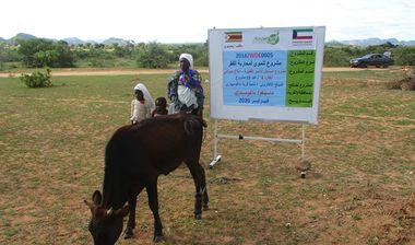 Directaid مشاريع التنمية Al-Sanabel Project Cow Production-4 8