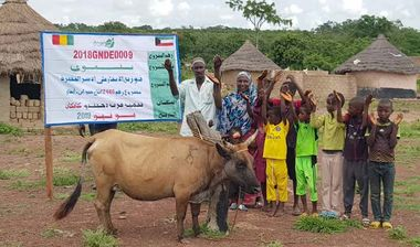 Directaid development project animal production cows-17 1
