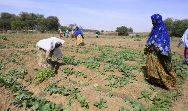 Directaid مشاريع التنمية Al Zeyada Farm 1