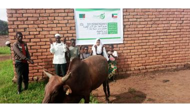 Directaid مشاريع التنمية Sudair Project - Raising Cows - 2 1