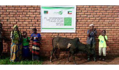 Directaid مشاريع التنمية Sudair Project - Raising Cows - 2 3