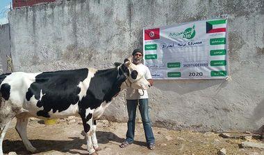 Directaid مشاريع التنمية Raising Cows 1