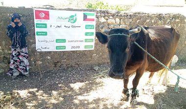 Directaid مشاريع التنمية Raising Cows 3