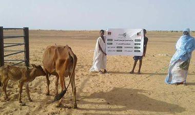 Directaid مشاريع التنمية Jawhra Al-Khair Project -12 1