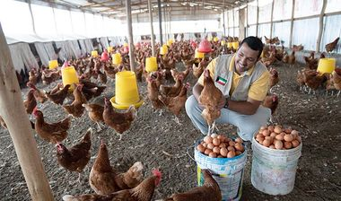 Directaid development Poultry Rearing - Alsaad Farm 1
