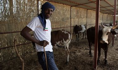 Directaid  Good living project for raising cows 3 1