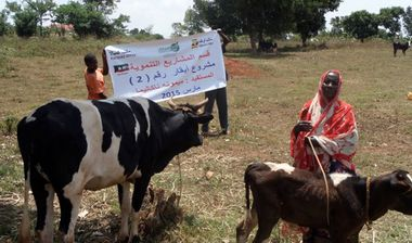 Directaid مشاريع التنمية Animal Production Project - Cattle 1