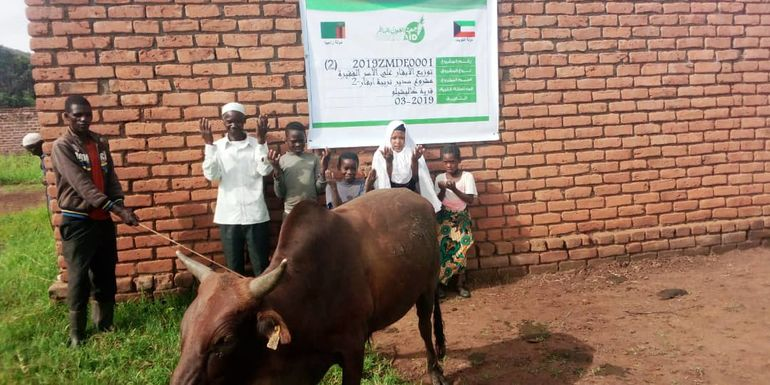 Directaid  Sudair Project - Raising Cows - 2 1