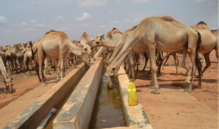 Directaid Water Projects Large artesian wells - Somalia 3