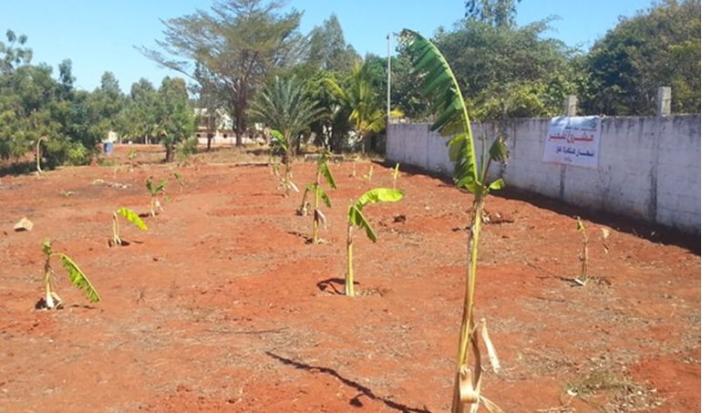 Directaid Developmental Projects Growing Trees 1