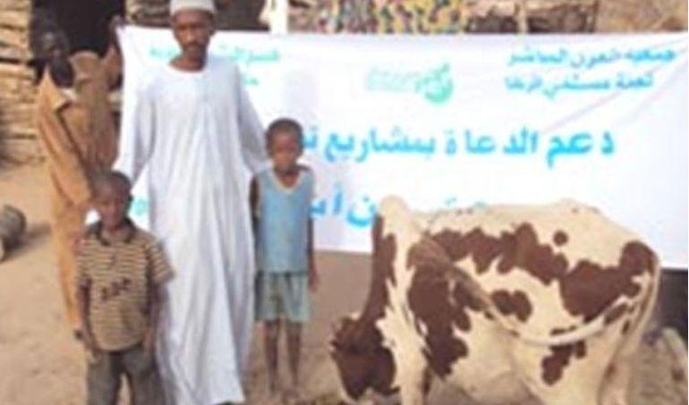 Directaid مشاريع التنمية project-animal-production-cows-2 2
