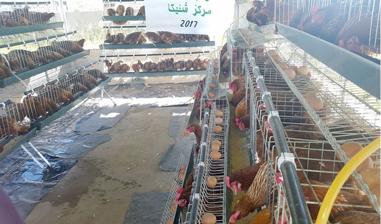 Directaid  Animal Production - Poultry - 1 1