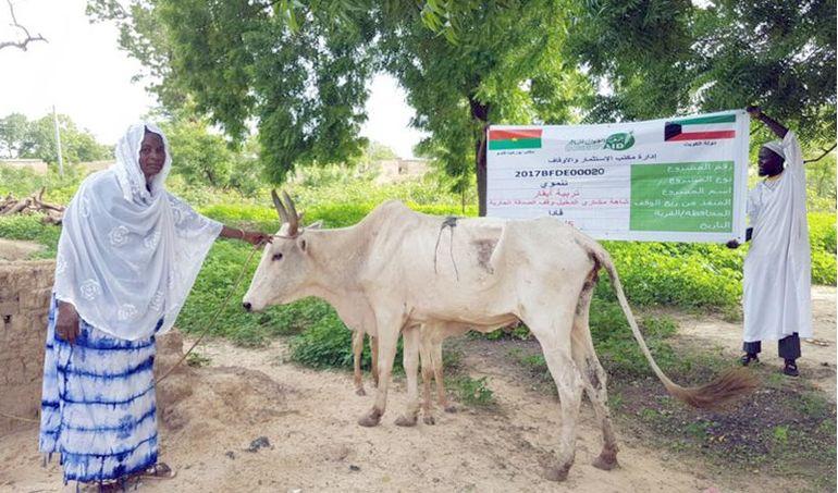Directaid مشاريع التنمية Development Goat - 2 8