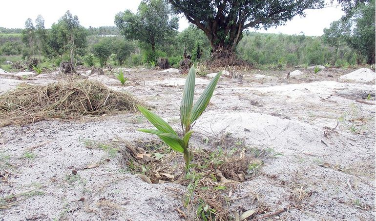 Directaid مشاريع التنمية Planting Menakara Orphanage 2