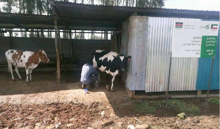 Directaid مشاريع التنمية Development Goat - 2 6