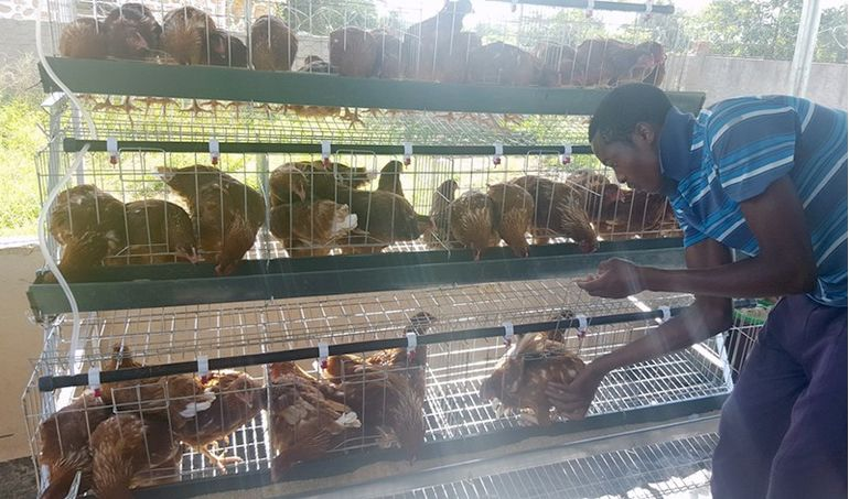 Directaid development Animal Production - Poultry - 1 4