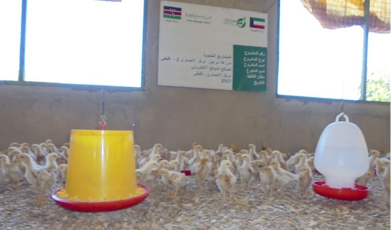 Directaid مشاريع التنمية Animal Production - Poultry - 2 5