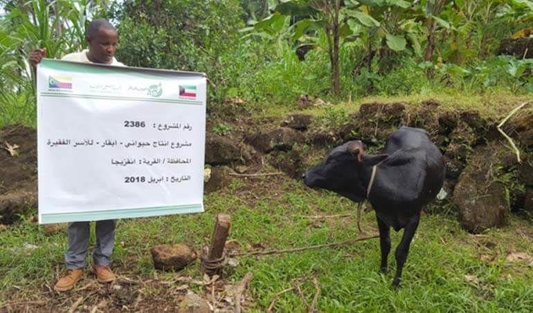 Directaid مشاريع التنمية Cows Project - Poor Family-6 1