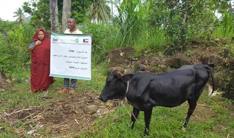 Directaid مشاريع التنمية Cows Project - Poor Family-6 2