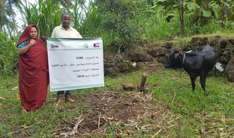 Directaid مشاريع التنمية Cows Project - Poor Family-6 4