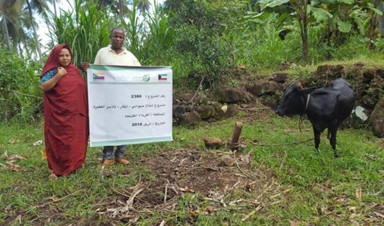 Directaid مشاريع التنمية Cows Project - Poor Family-6 5