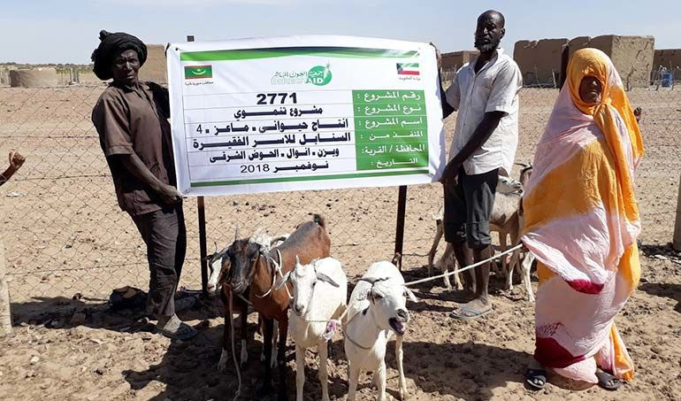 Directaid  Al-Sanabel Project - Goat Production-4 1