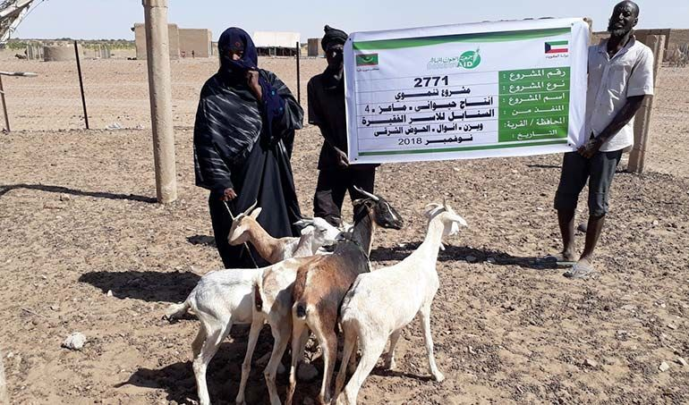 Directaid مشاريع التنمية Al-Sanabel Project - Goat Production-4 2