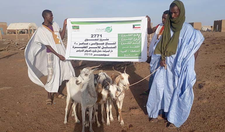 Directaid مشاريع التنمية Al-Sanabel Project - Goat Production-4 4