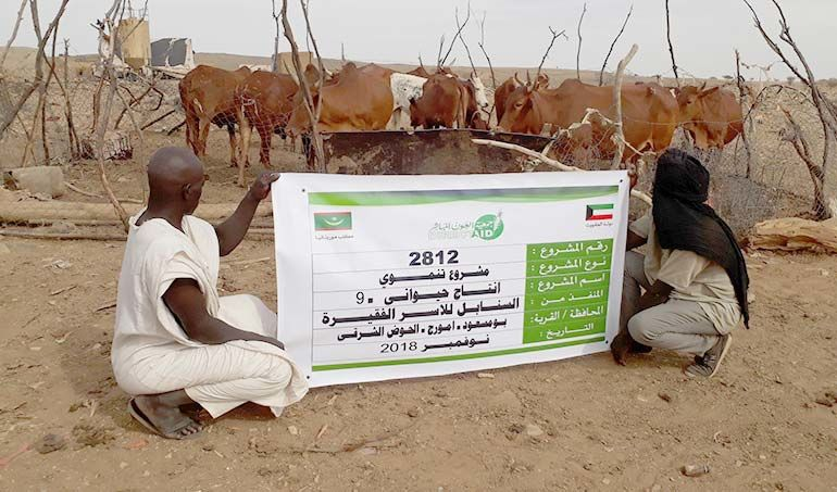 Directaid  Al-Sanabel Project Cow Production-9 1